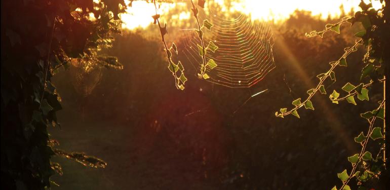 Un incipit al giorno italo calvino il sentiero dei nidi for Il sentiero dei nidi di ragno